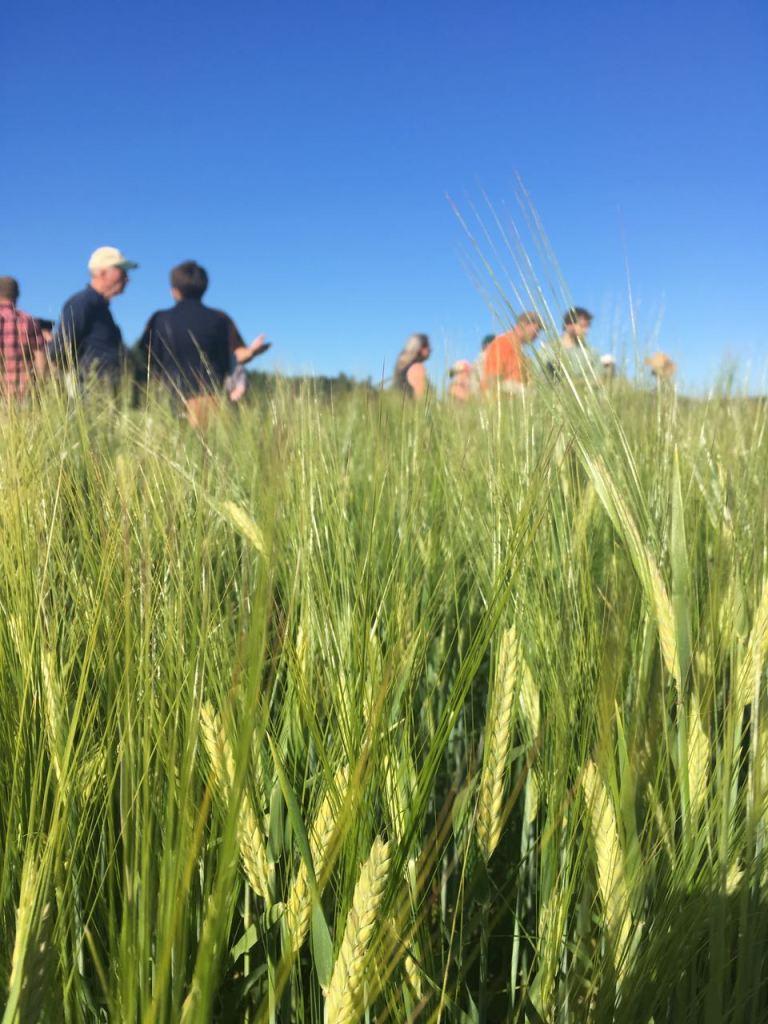Barley 2017