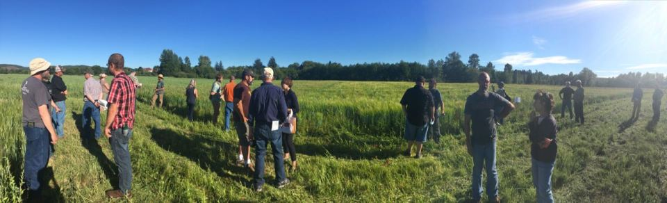 Barley Field Walk 2017